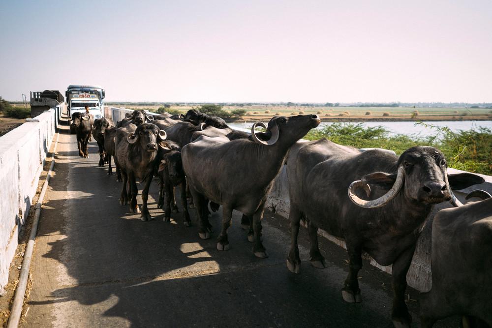 Gujarat_6220351.jpg