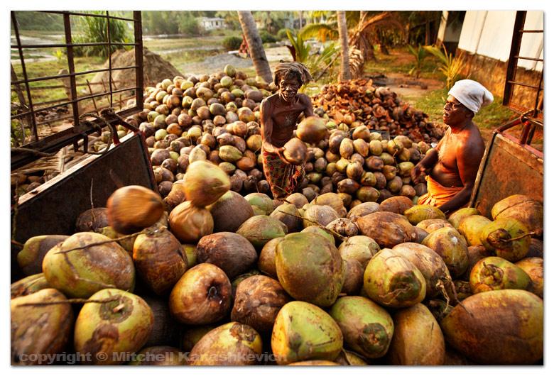alumkadavu-coconuts-01