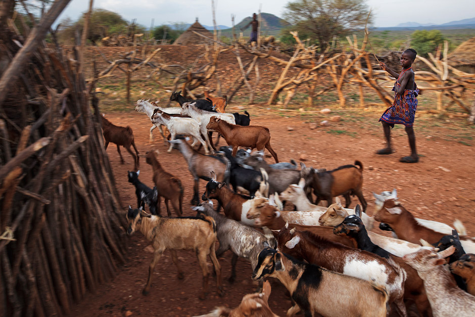 Hamer boy herding goats towards their house