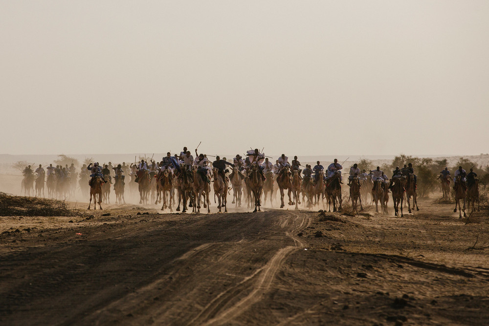 Hundreds of camels racing