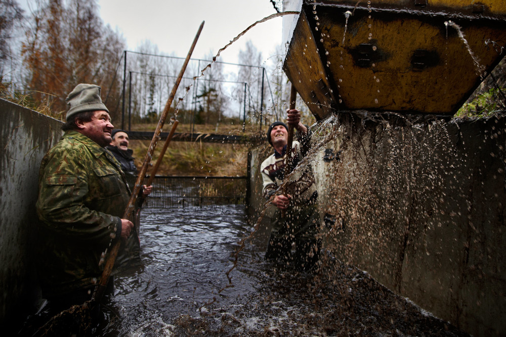 Belarusian fishermen watch a container with fish being lifted