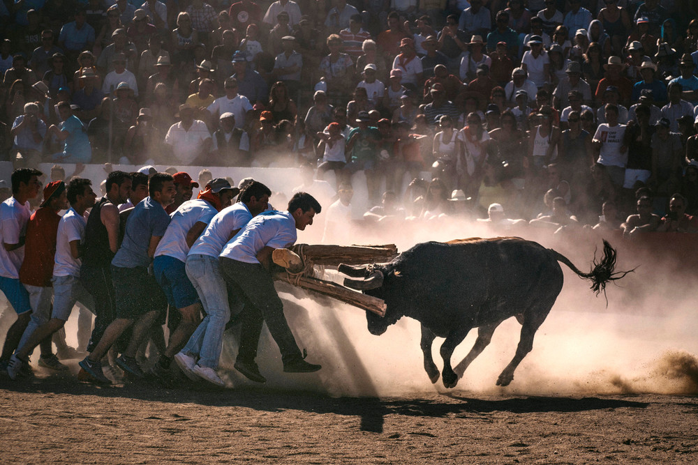 Capeia - men against bull in Portugal