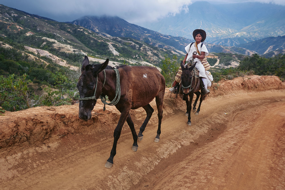 Arhuaco boy riding mule from Nabusimake