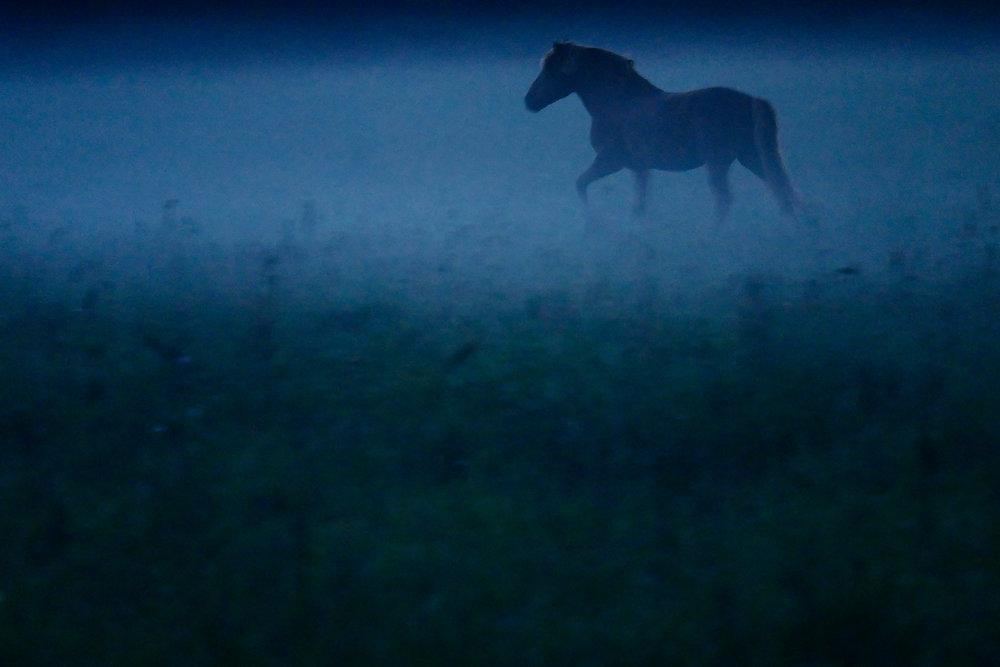 Braslav-fog-Belarus-horse