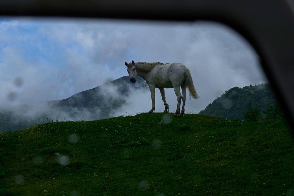 Svaneti-Ushguli-horse-rain
