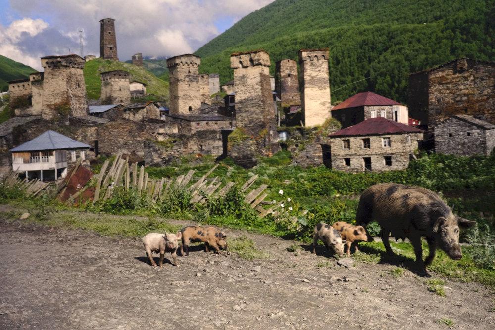 Svaneti-Ushguli-Georgia-pigs-town