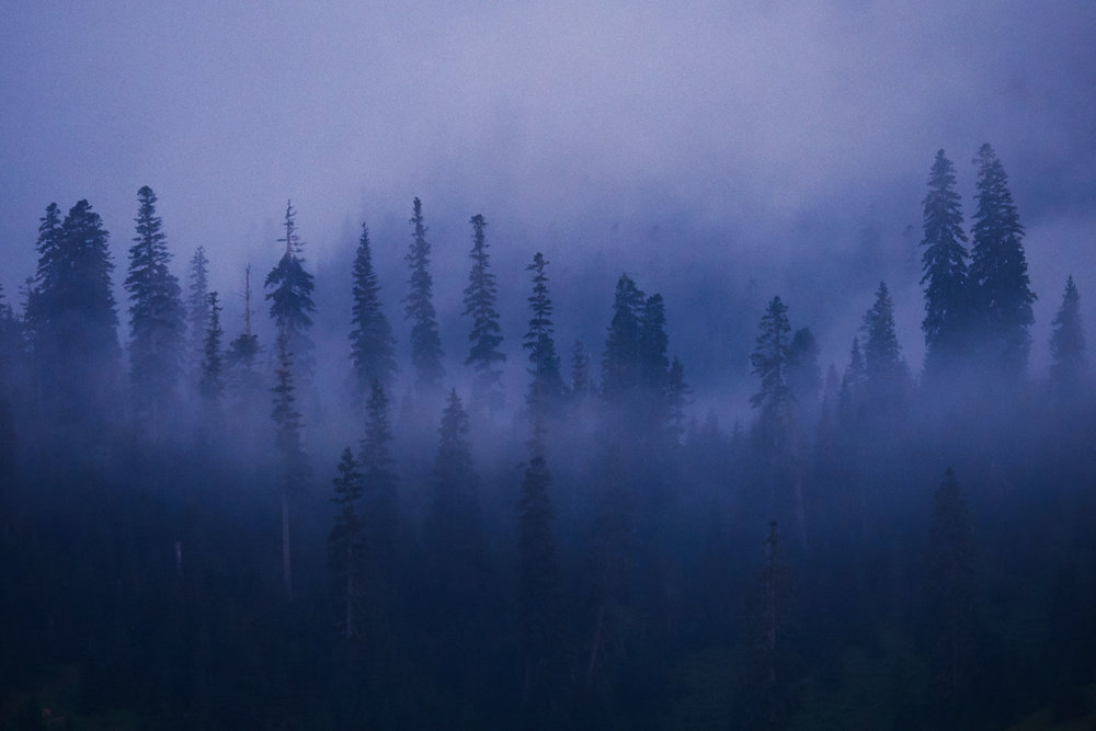 Bakhmaro-Georgia-Fog-and-trees