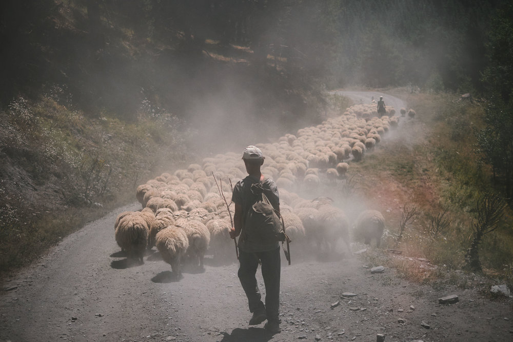 Tusheti-Georgia-Sheep-traffic-jam