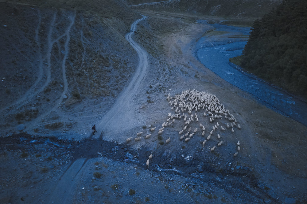 Tusheto-Georgia-herd-of-sheep-at-twilight