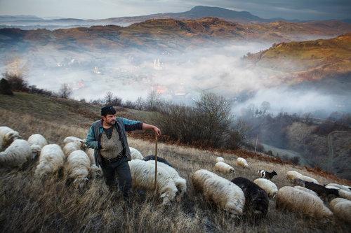 travel-photography-tips-shepherd-sheep