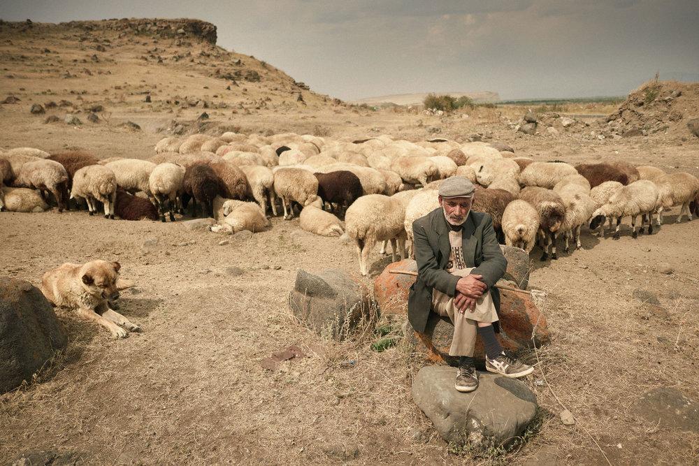Armenia-Lake-Sevan-Shepherd-with-sheep