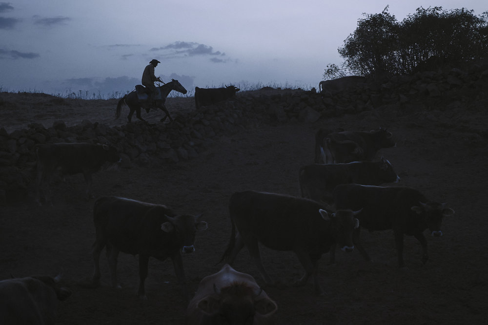 Armenia-Vayots-Sar-shepherd-taking-cows-in