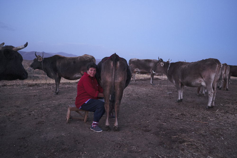 Armenia-Vayots-Sar-woman-milking-cows