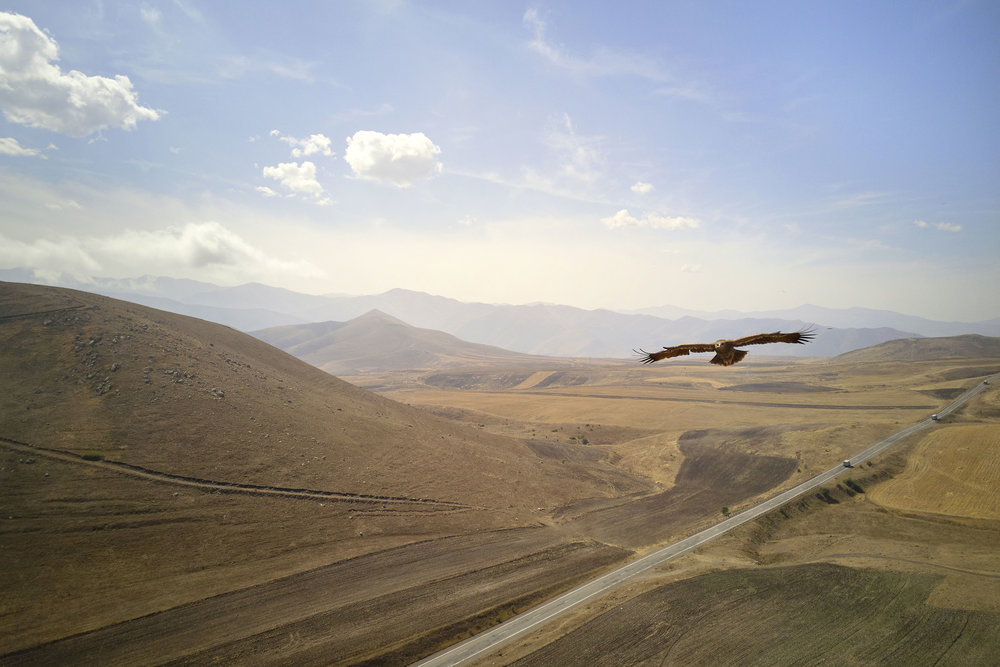 Eagle flying through the mountains