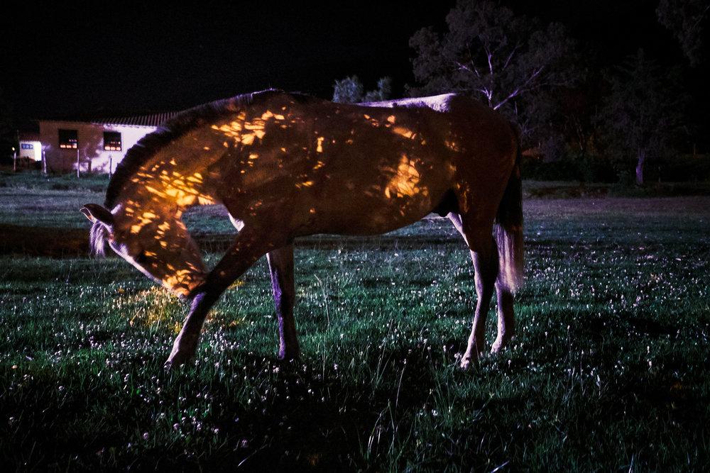 Horse in Villa de Leyva