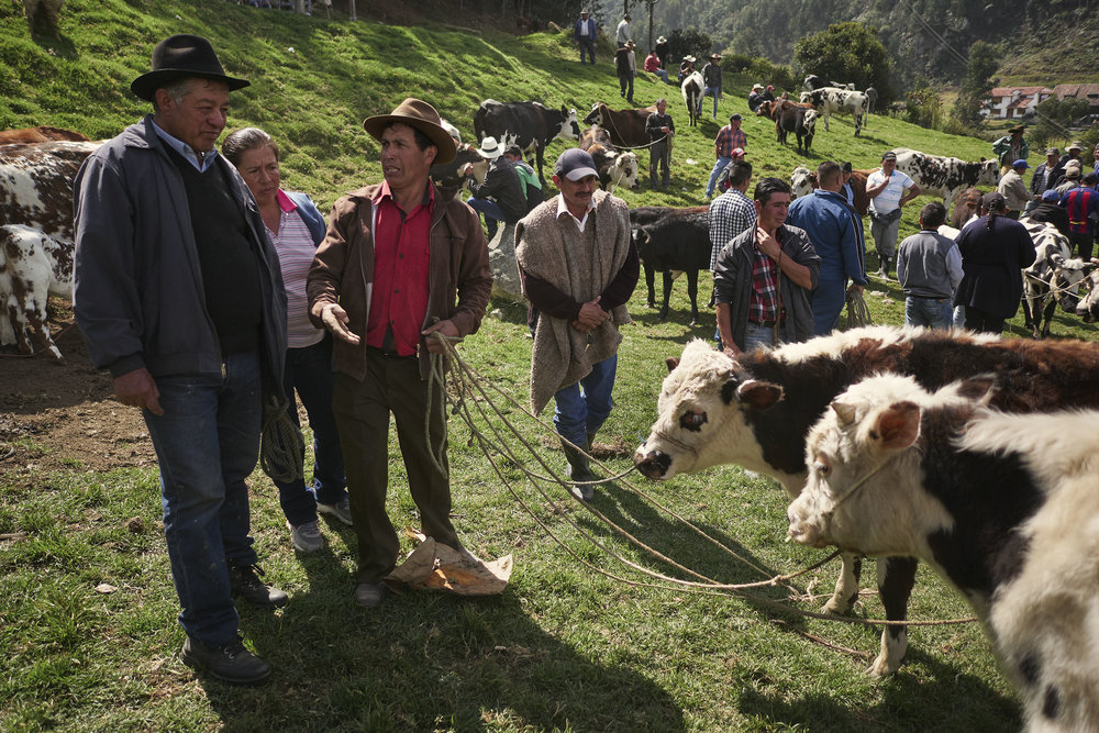 Buyers and sellers at animal market at Mongui, Boyaca, Colombia