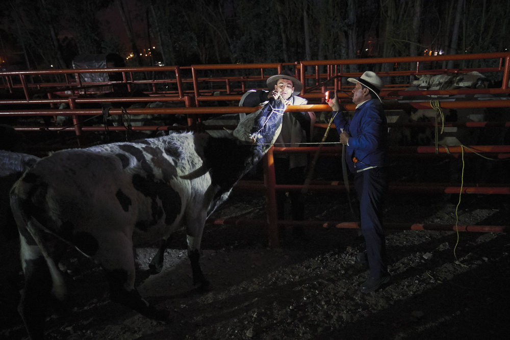 Buying a bull in Sogamoso, Boyaca, Colombia
