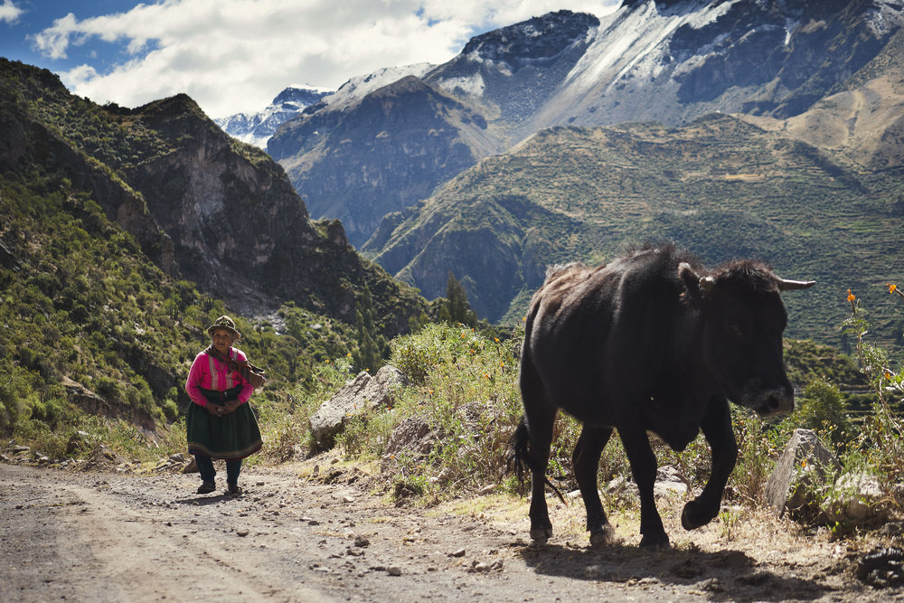 Woman with her cow in the Andes Peru