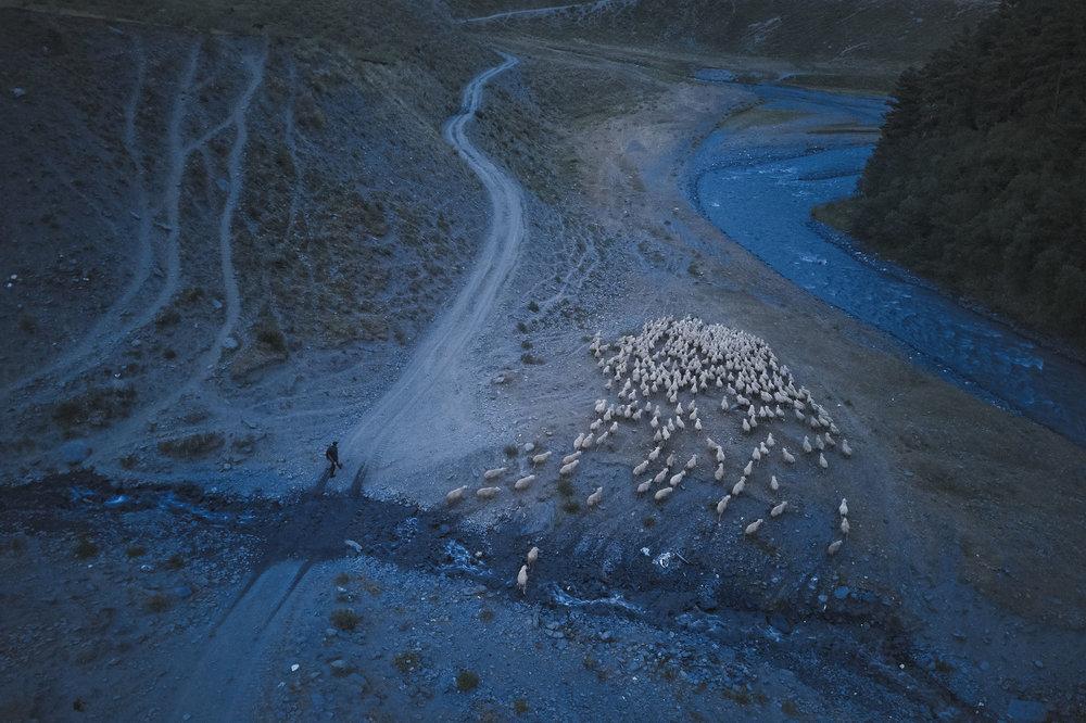 Tusheto-Georgia-herd-of-sheep-at-twilight.jpeg