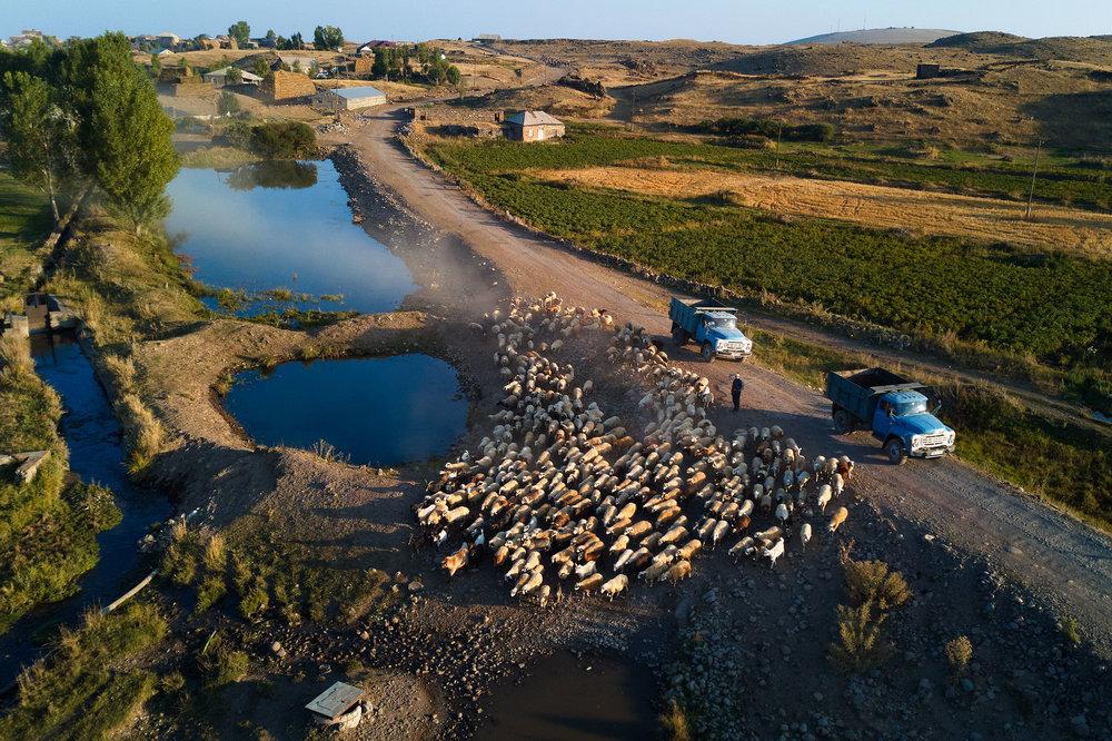 Armenia-mountains-sheep-cows-soviet-cars.jpeg