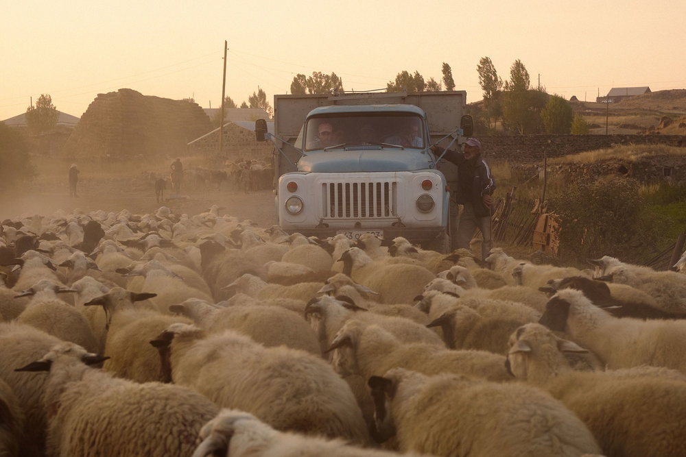 Sheep in front of a Soviet truck in North Armenia.JPG