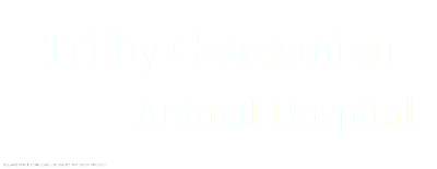 Trilby Companion Animal Hospital | Small Animal and Exotics Veterinarian