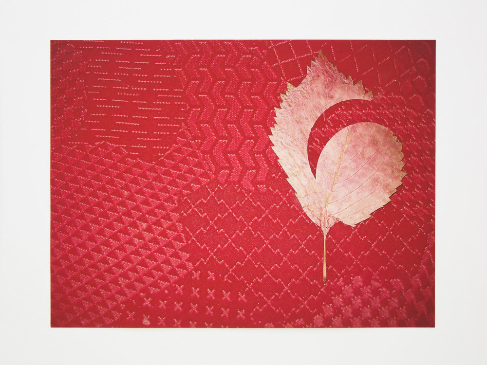 Red leaf, 2017. Color print (Edition of 3), 38 x 28.4 cm.