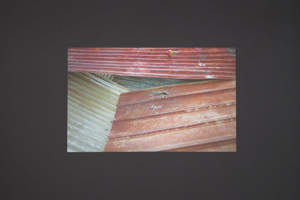 "Donna Conlon & Jonathan Harker, Tropical Zincphony, 2013. HD 16:9, 1' 50"""