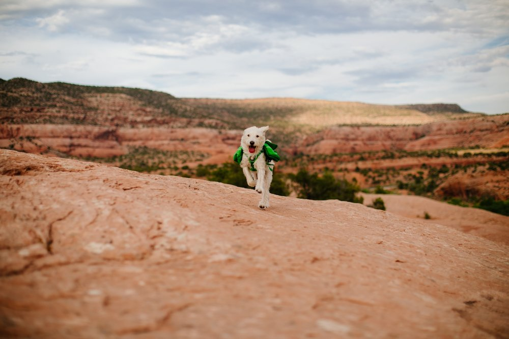 catie-bergman-adventure-elopement-photographer-utah-southwest-arizona-desert-catie-bergman-photography-pnw-newborn-portrait-lifestylephotography_0028.jpg