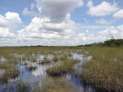 Everglades-Vista 02.jpg