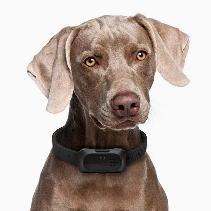 Motorola Pet Training Series, Product Design