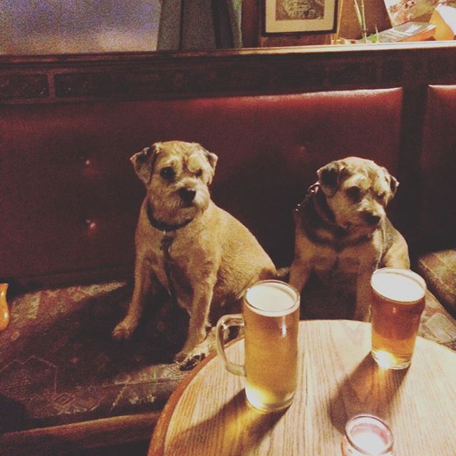 The second best pub in Brighton also serves dogs don't you know! #craftbeer #handinhand #handbrewpub #brightonpubs