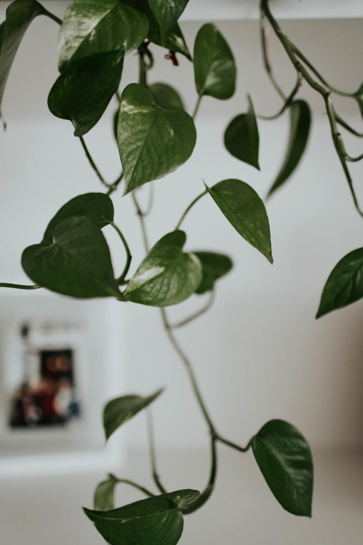 Abby Roses-56.jpg