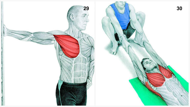 Which Muscles are you Actually Stretching? 34 Illustrations — Blox ...