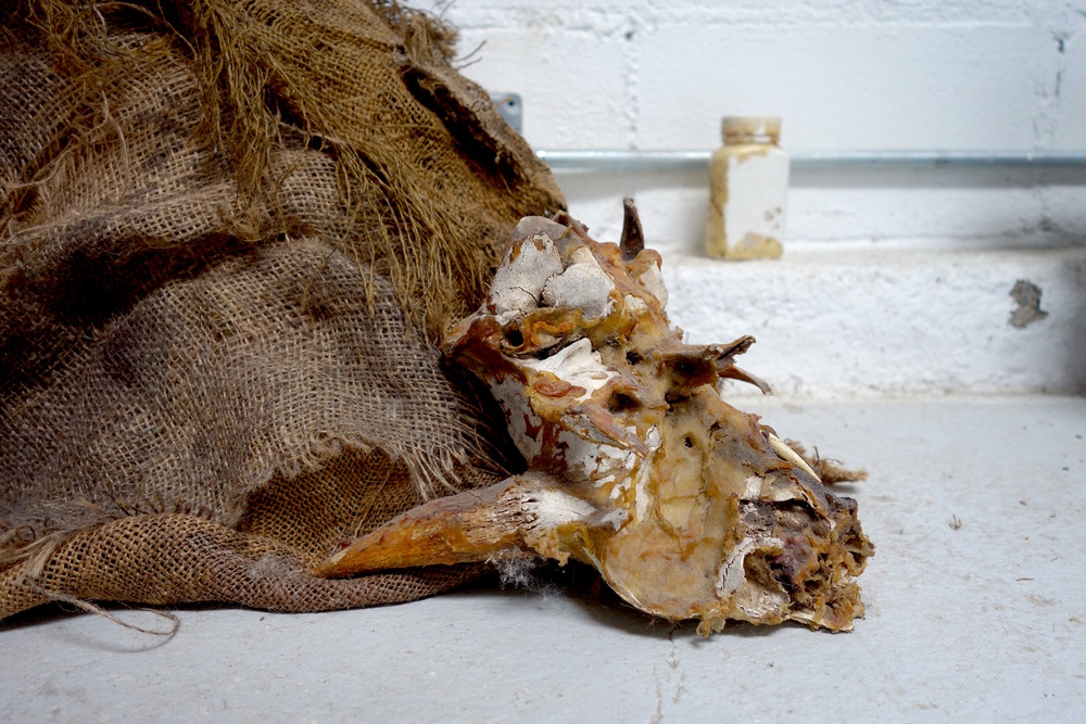 Camel skull end.jpg