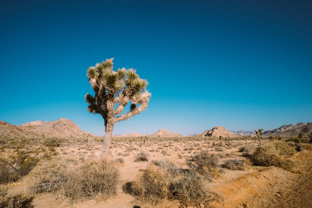 Amber Marlow Joshua Tree 3.jpg