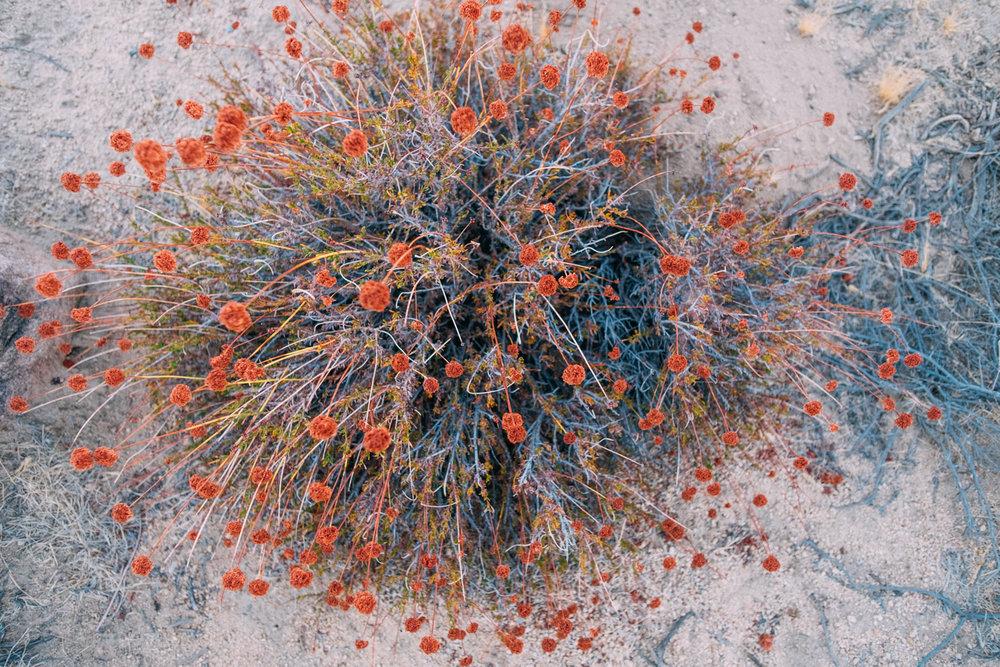 Amber Marlow Joshua Tree 27.jpg