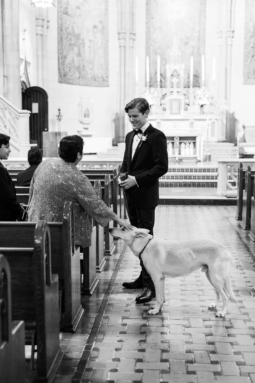 Dog in church getting a pat.