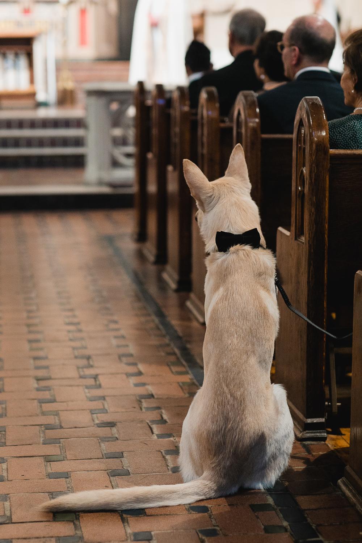 Dog serving as ring bearer.
