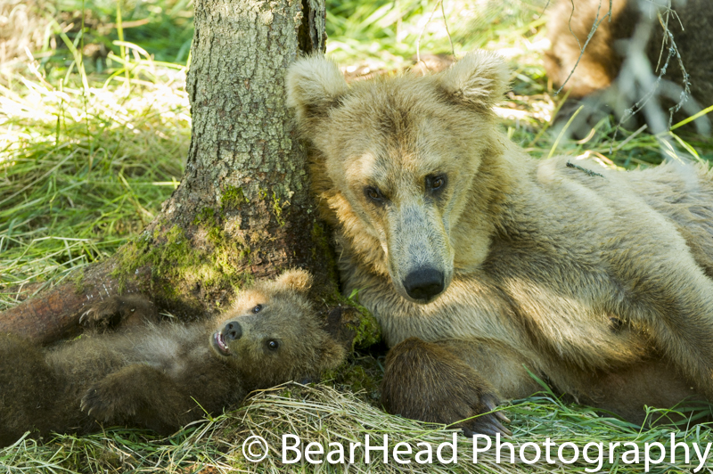 A mom and spring cubs rest peacefully together by a tree.
