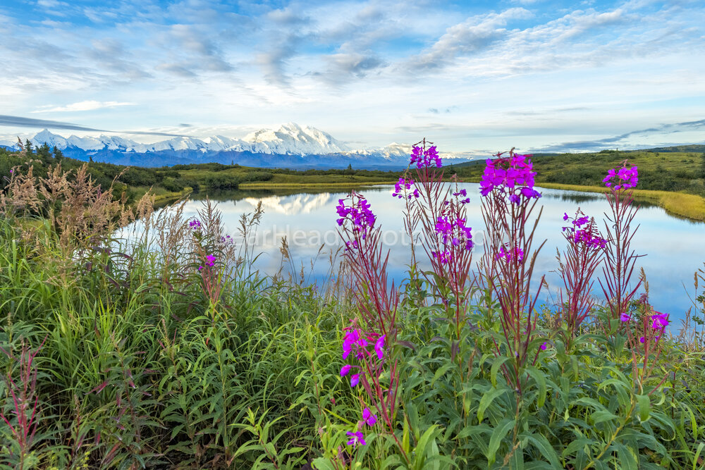 Fireweed View