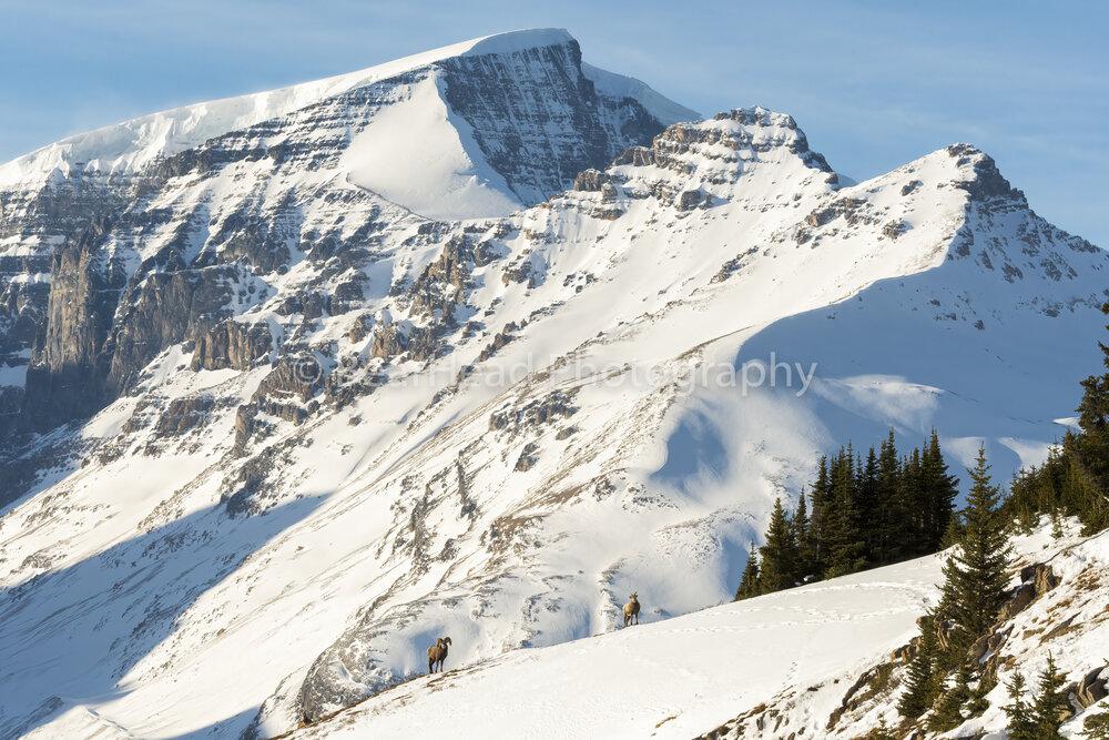 Large Winter Range