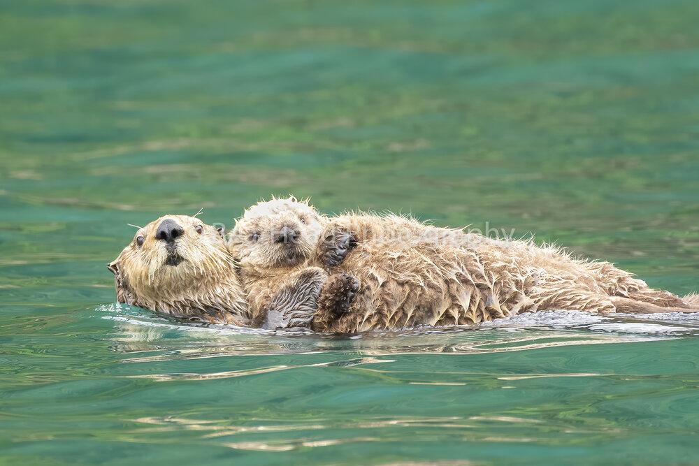 A Mom's Embrace