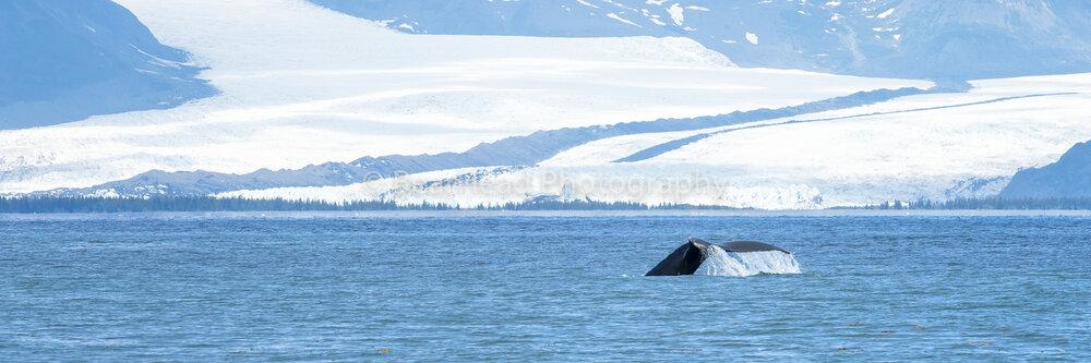 Glacier Tail