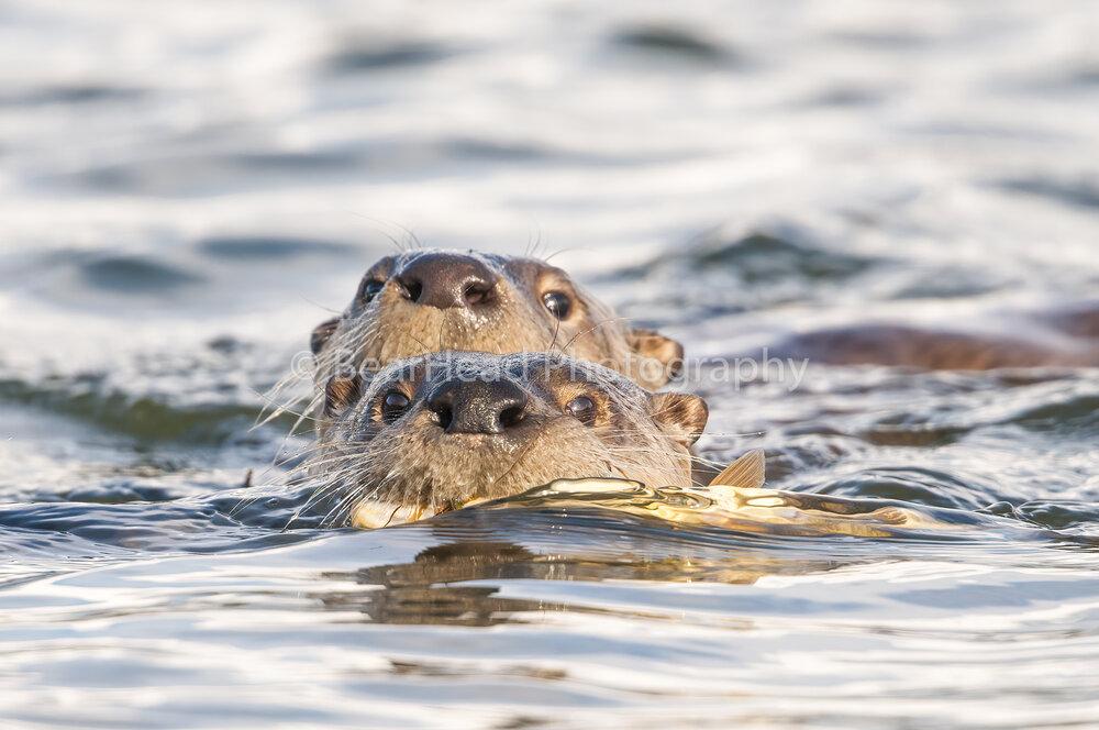 Swimming Close