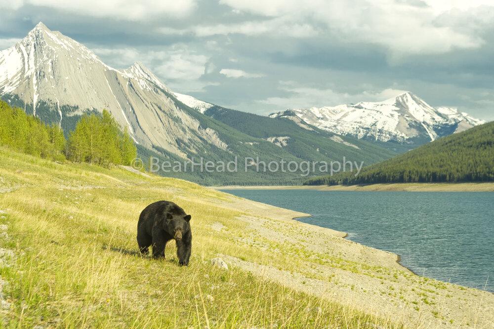 A Bear's Range