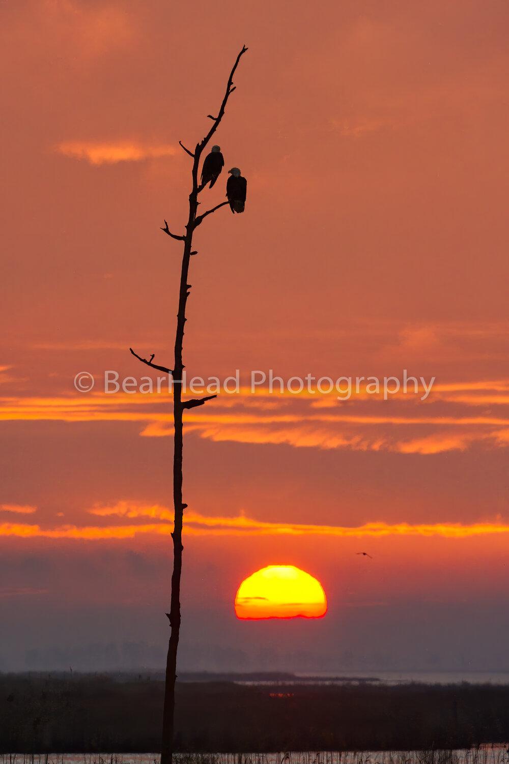 Morning Eagles