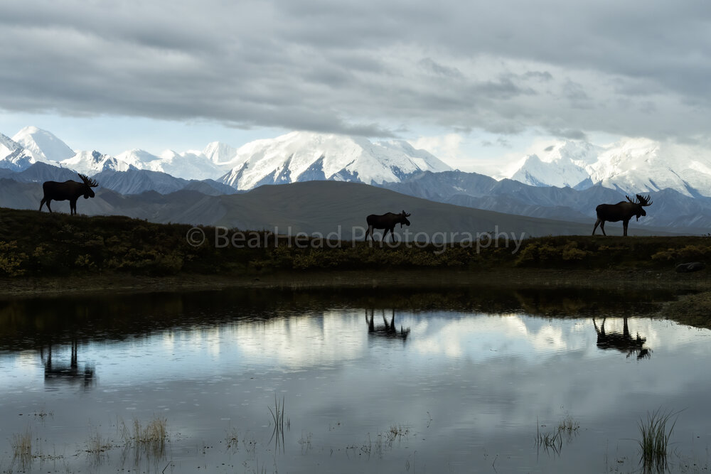 Alaska's Finest