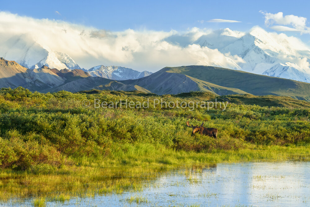 Denali's Treasures