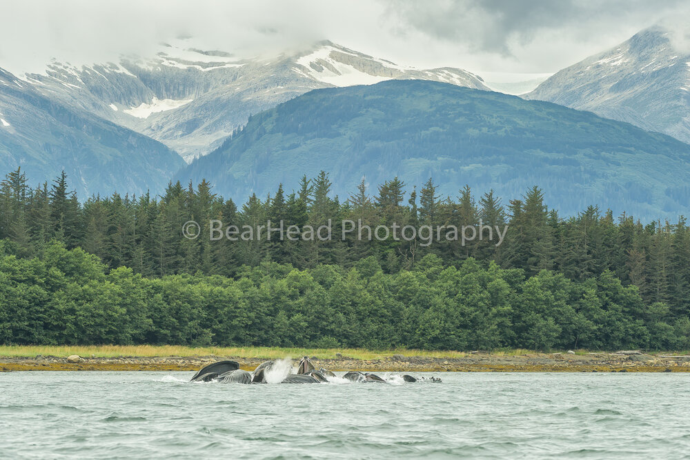 Humpback Waters